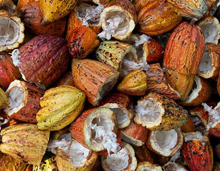 Cacao Pods Rodrigo Flores Opno2uwx0ie Unsplash