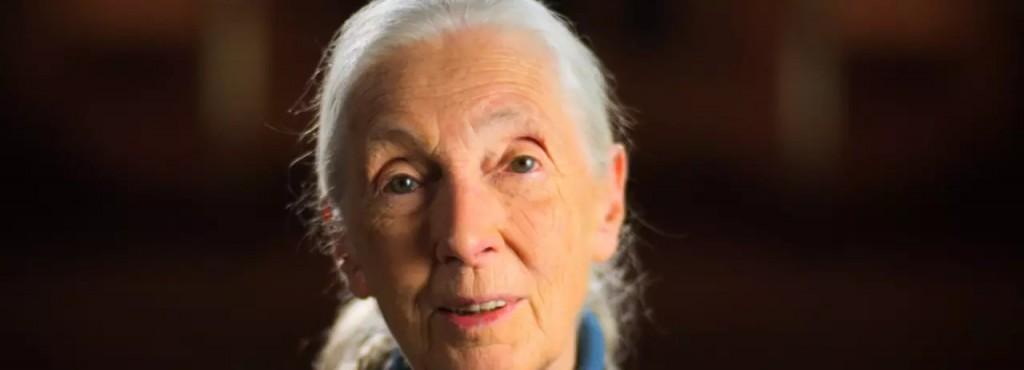 Jane Goodall 1200x675jpgrev