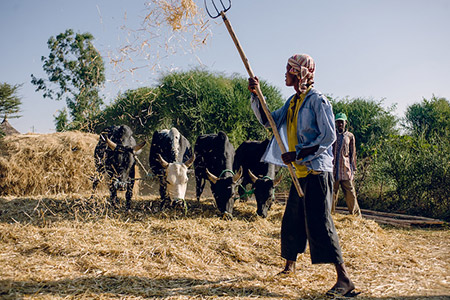 Africa Farm 35084194223 Ac0999b6fa C