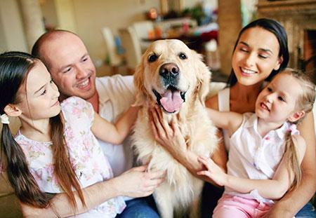 Dog Family 30225517 M