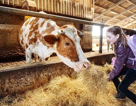 Cow Child 69658503 S