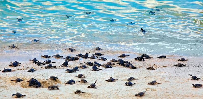 Sea Turtles 22972113 S