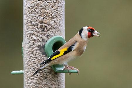 Birdfeeder 130413152 S