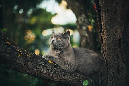 Cat Tree Max Bottinger Yl3cxnwv4m Unsplash