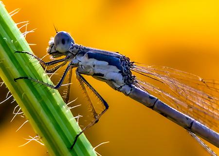 Dragonfly Dustin Humes 7iy1m95dpda Unsplash