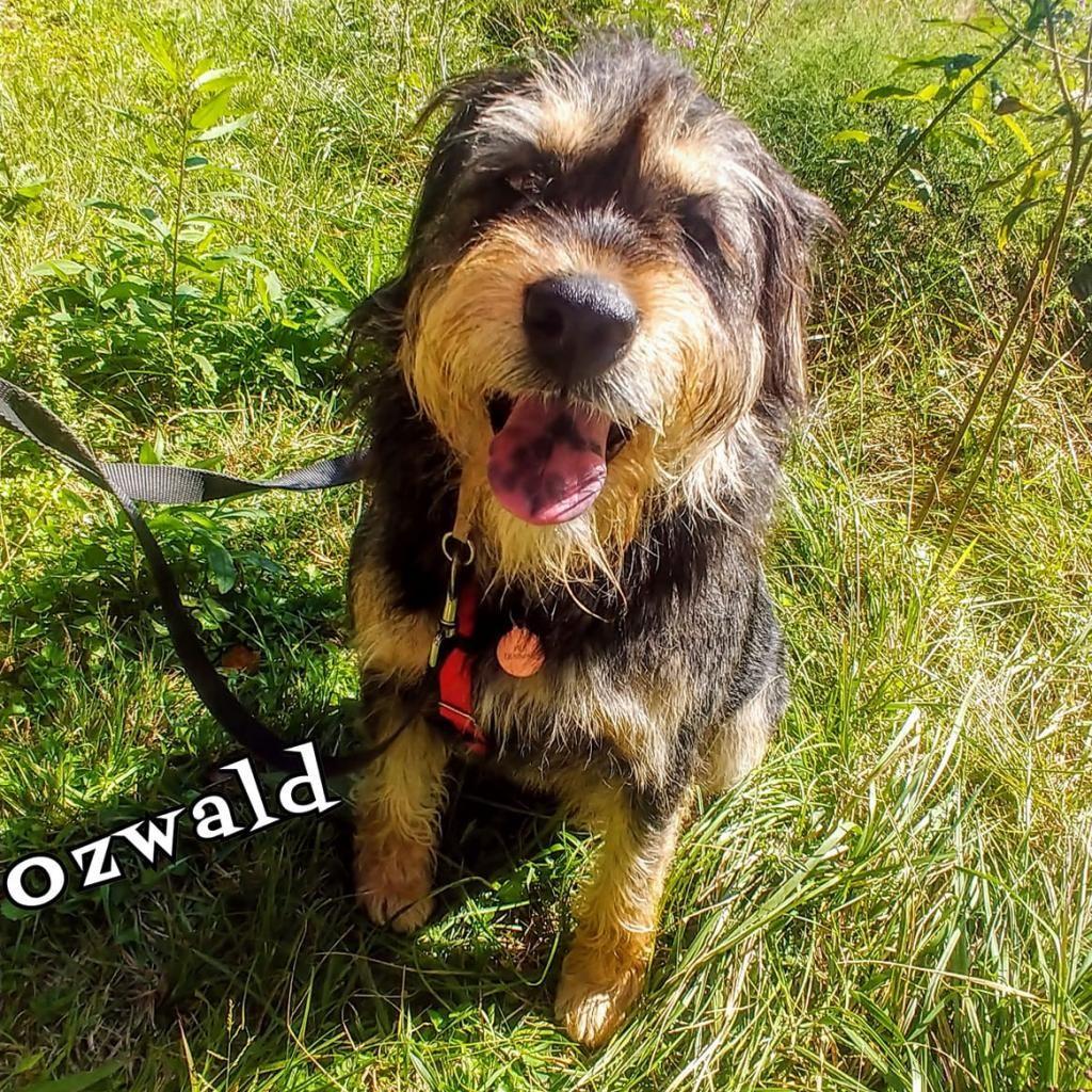 Ozwald2