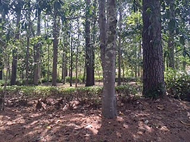 429 Lacy Woods Court, Tallahassee, FL