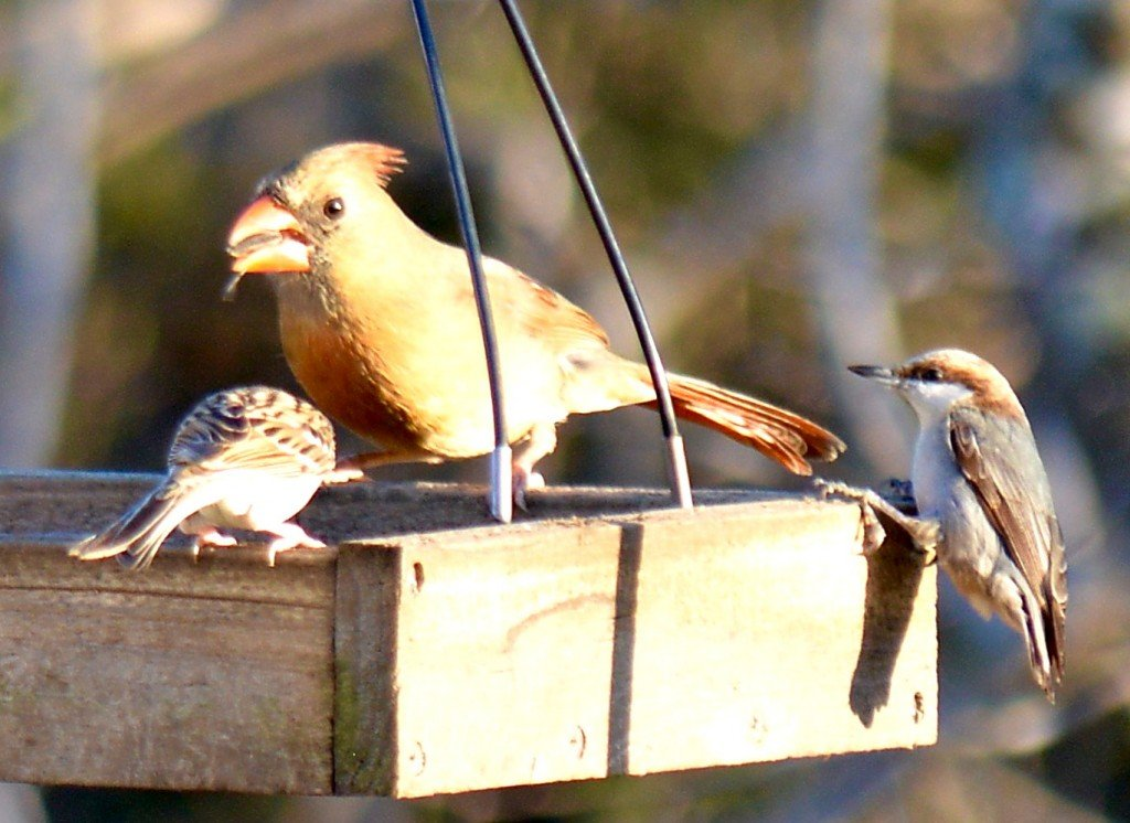 Trio Of Birds At Feeder