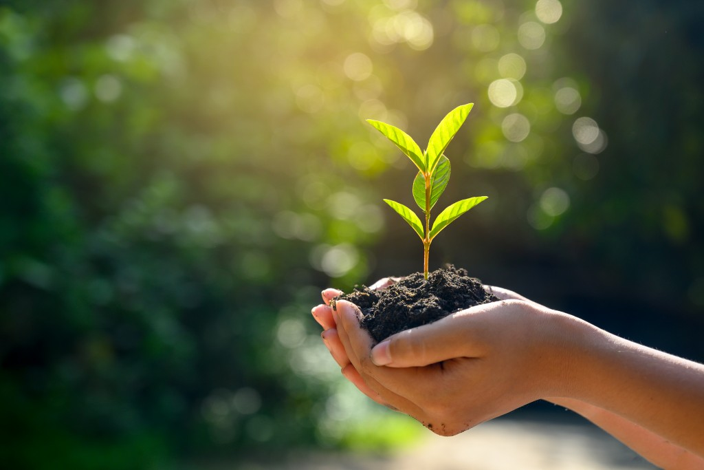 In The Hands Of Trees Growing Seedlings. Bokeh Green Background Female Hand Holding Tree On Nature Field Grass Forest Conservation Concept