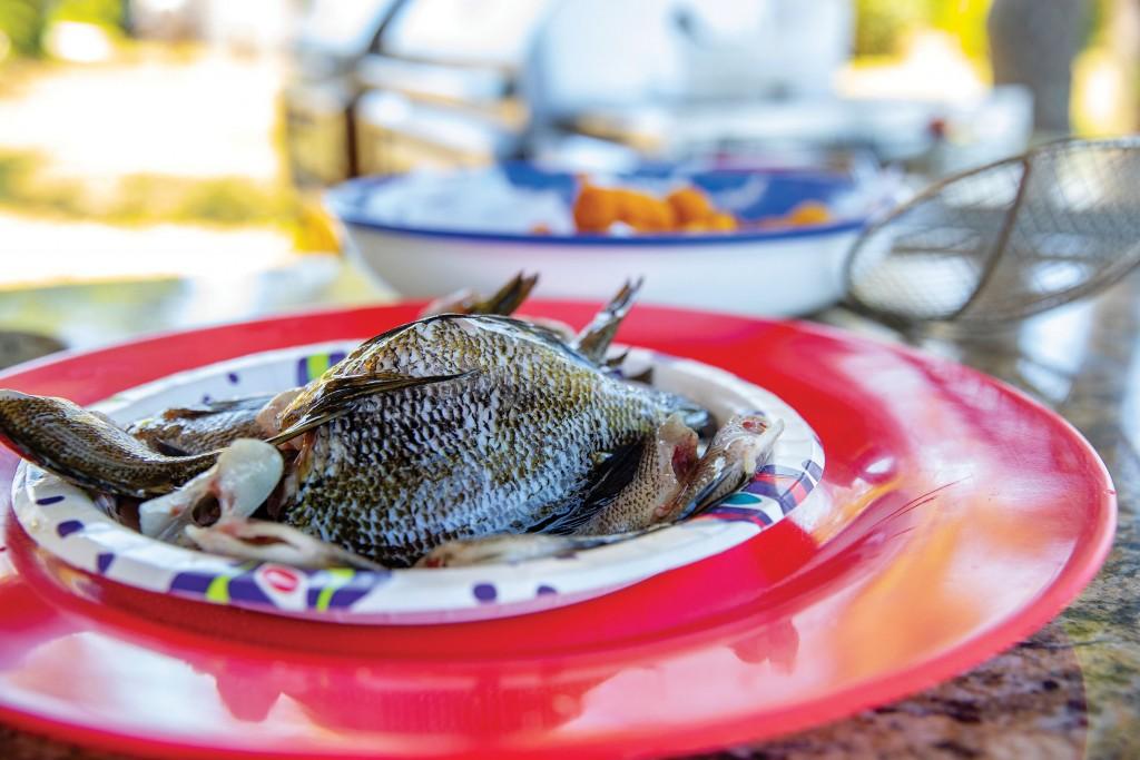 024 050821 Cooking Bream Fish Ccsz