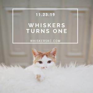 Whiskers Cat Cafe Turns One!! @ Historic Columbus Park   Kansas City   Missouri   United States