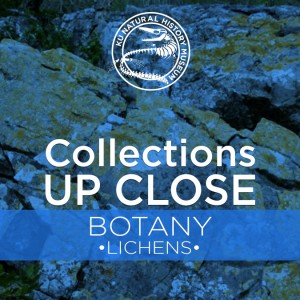 Collections Up Close: Botany @ KU Natural History Museum | Lawrence | Kansas | United States