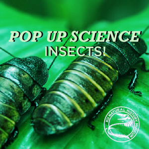 Pop Up Science: Insects @ KU Natural History Museum | Lawrence | Kansas | United States