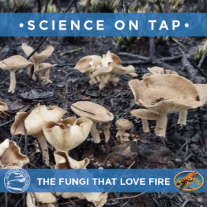Science On Tap: The Fungi That Love Fire @ Free State Brewing Co. | Lawrence | Kansas | United States