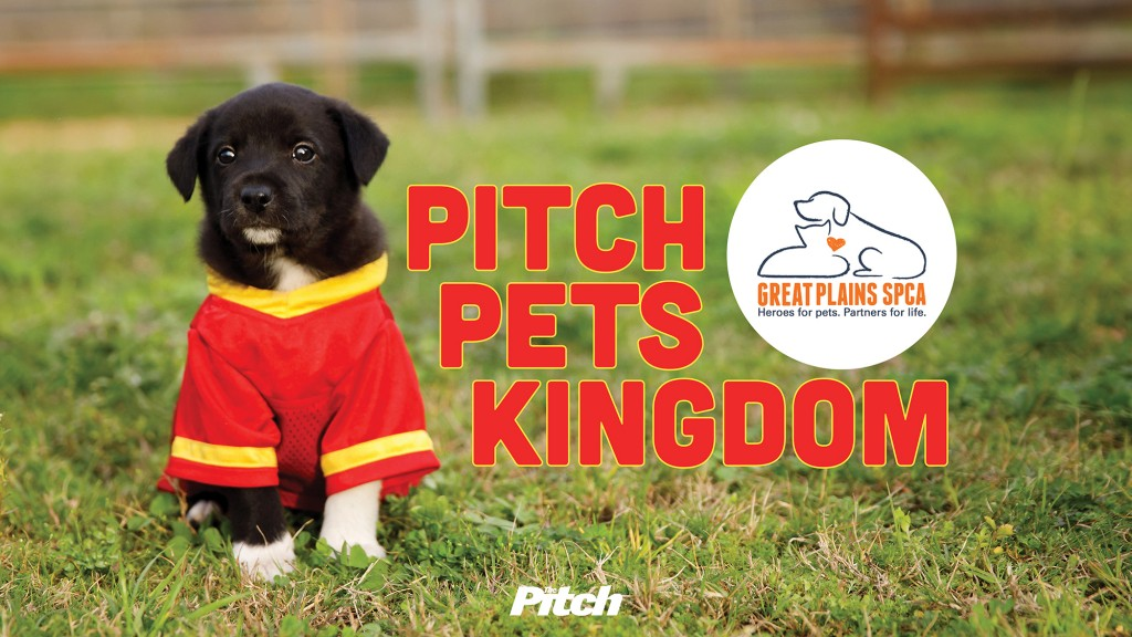 Pitch Pets Kingdom Header