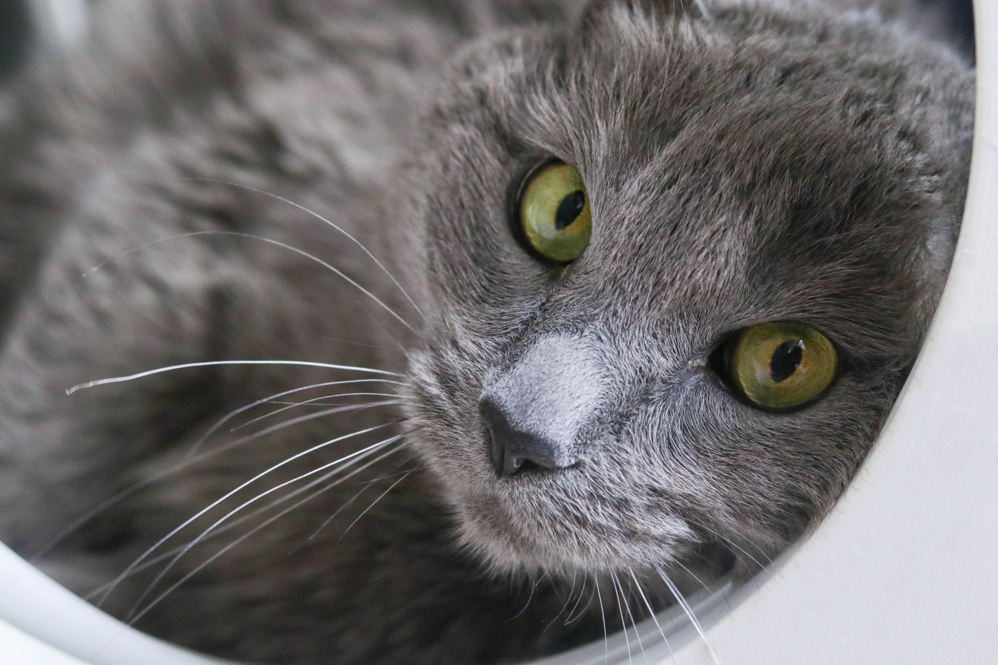 Creature Feature: A lovable soul is behind Tobi's piercing eyes (and you can adopt Tobi right now)
