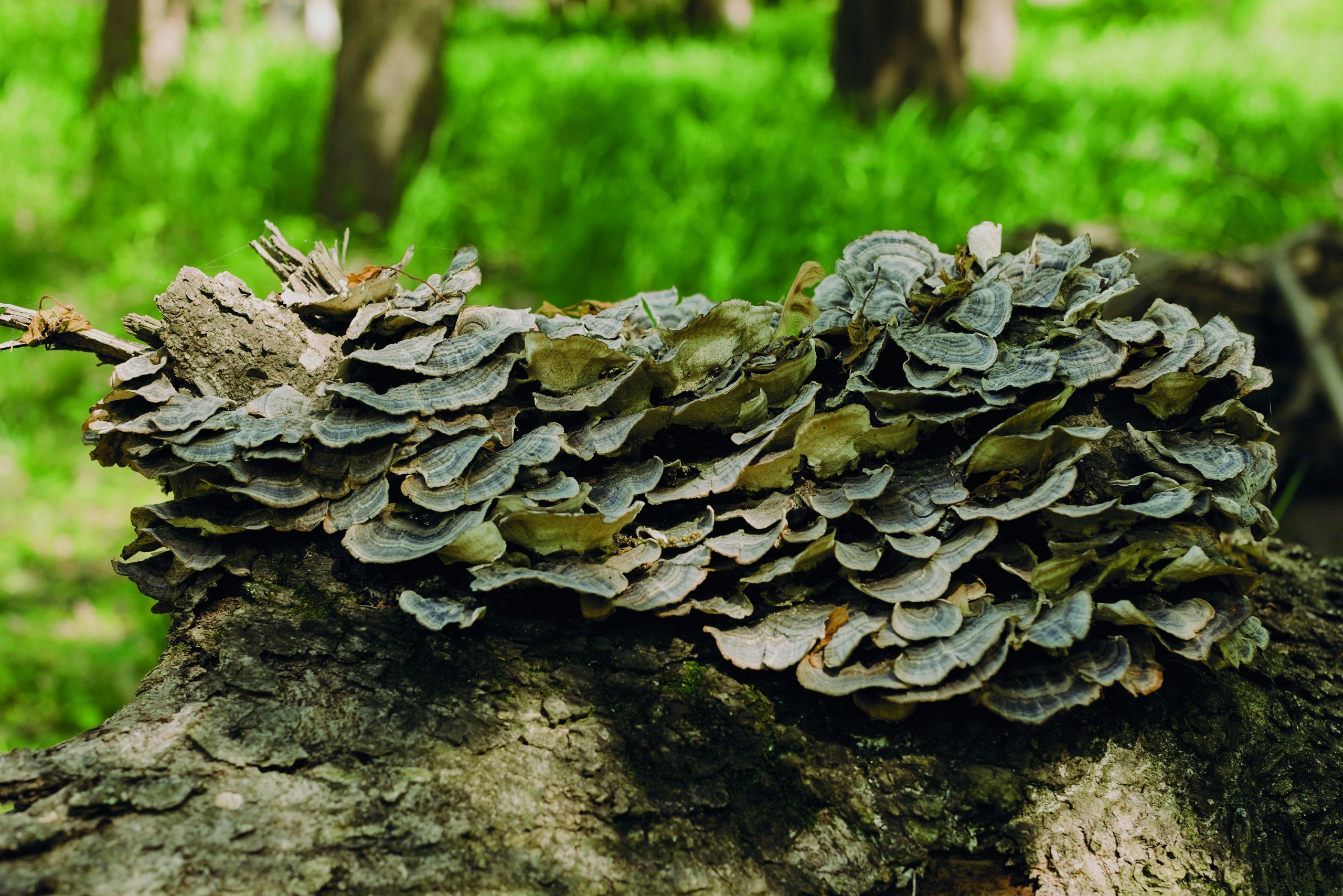 Magic (of) mushrooms - Kansas City, Missouri - Eminetra