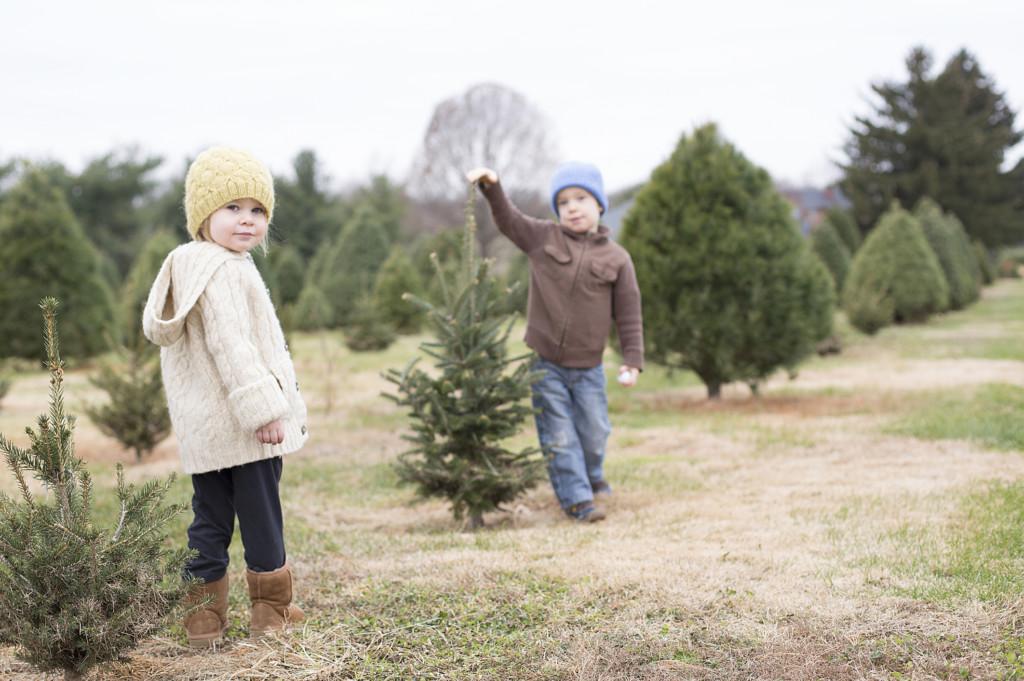 Christmas Tree Farms In The Tulsa Area Tulsakids Magazine