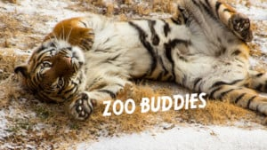 Zoo Buddies: Head, Haunches, Tails & Toes ¬ Winter (3yo-to-pre-K class) @ Tulsa Zoo | Tulsa | Oklahoma | United States