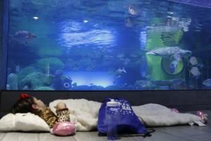 ZZZs in the Seas @ Oklahoma Aquarium | Jenks | Oklahoma | United States