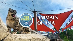 Zoo Insider: Animals of Asia (9-12 grade session) @ Tulsa Zoo