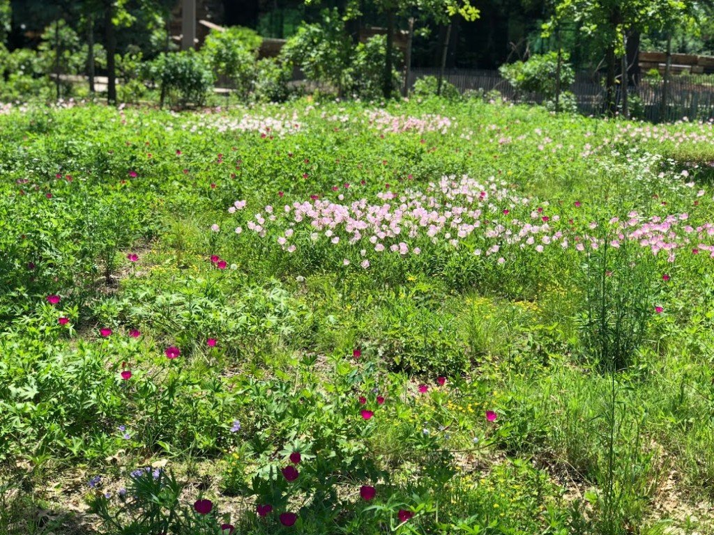 Wildflower Meadow At The Gathering Place Mak