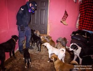 Hardin County Animal Rescue Corps