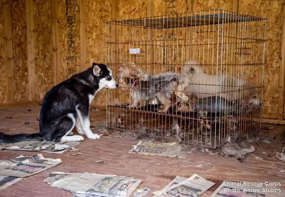 Dog Rescues Dog