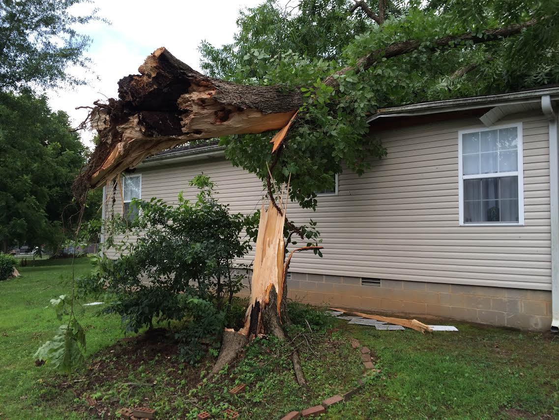 Strong Winds Blamed For Towering Tree Falling On House
