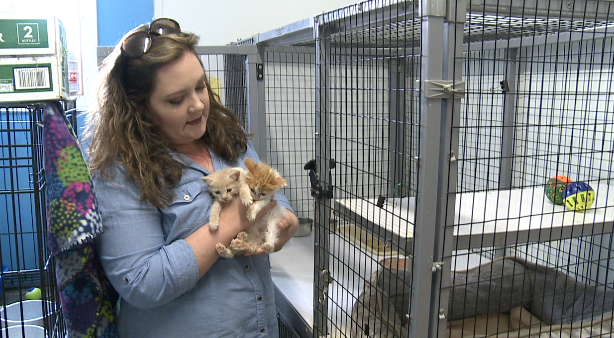 """Summer is known as """"kitten season"""" in Carroll County because of the number of new cats the shelter is forced to take in."""