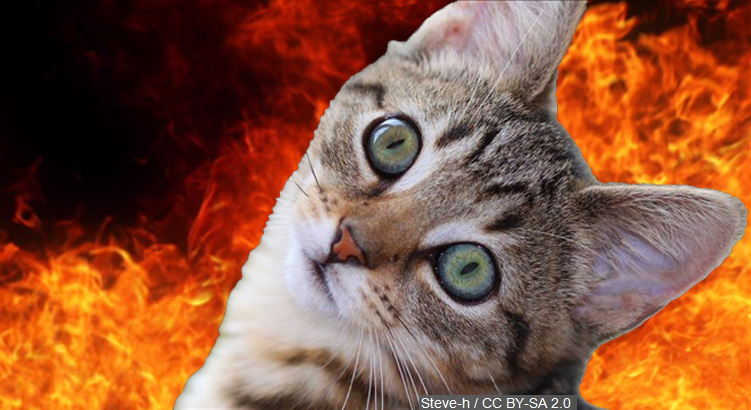 Man Survives Fire Thanks to His Cat