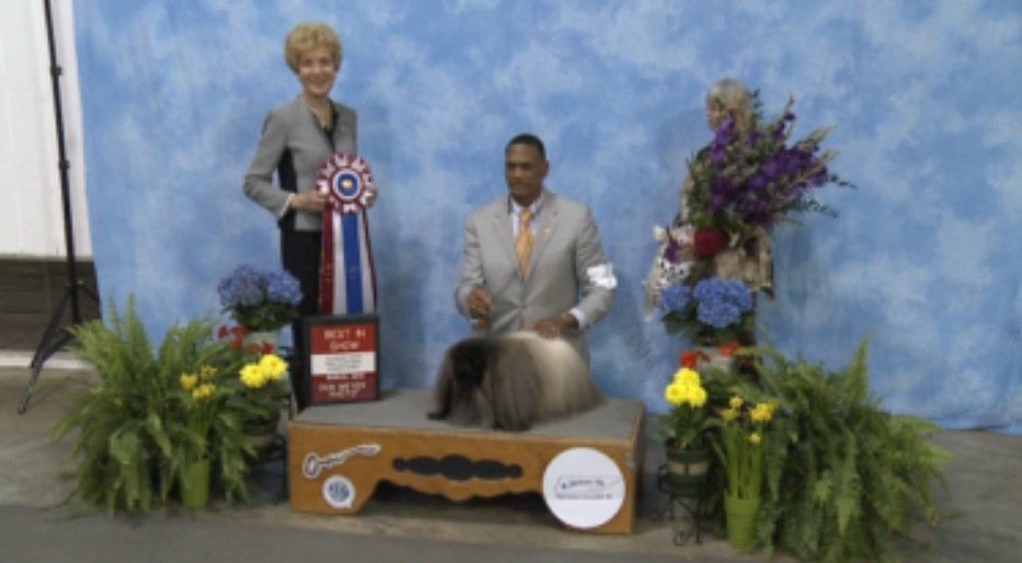 Pekingese wins best in show at AKC All Breed Dog Show in