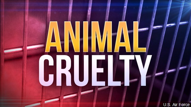 More than 200 animals removed from house, homeowner charged