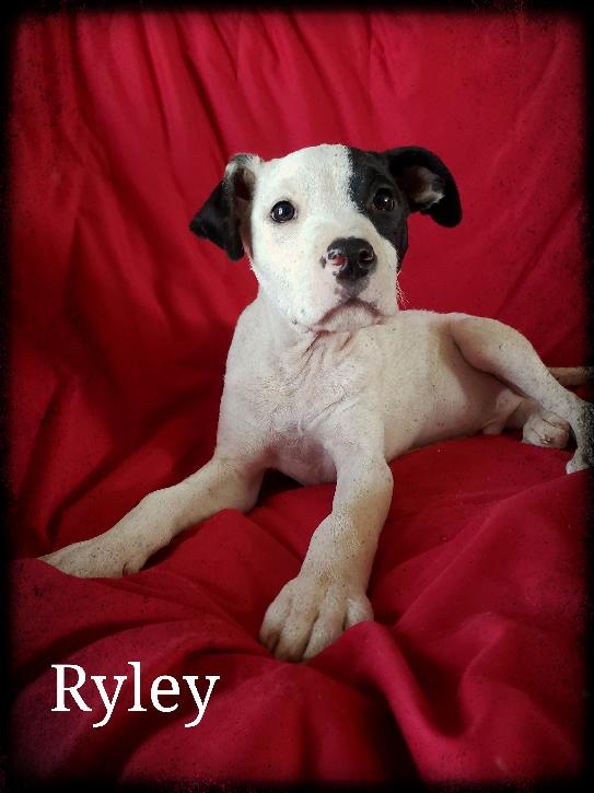Pet Of The Week Ryley