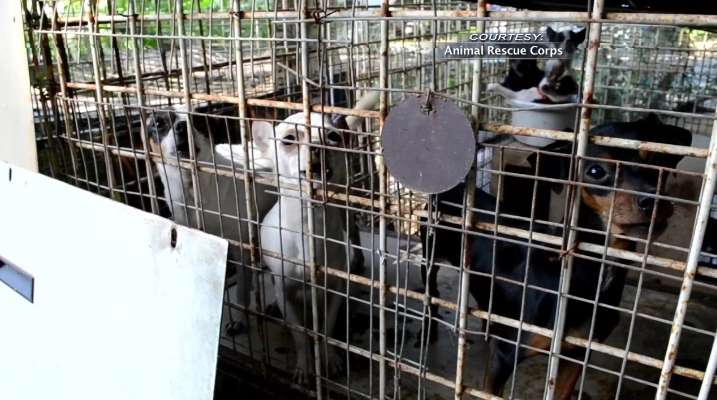 Animal Rescue Corps releases new video of Henry Co. investigation - WBBJ TV