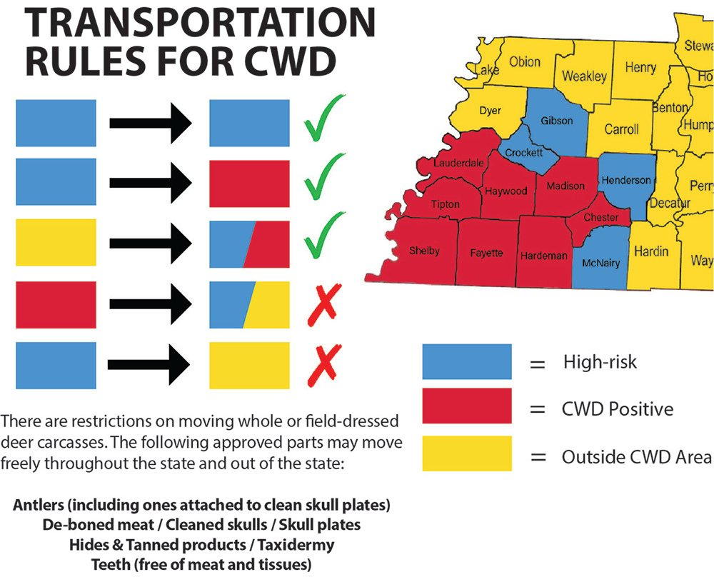 Cwd Transport Graphic 7