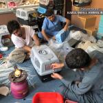 Kabul Small Animal Rescue 3