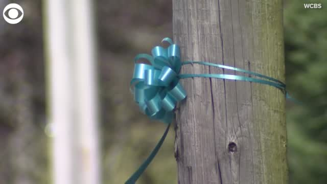 Teal Ribbons Line Streets Of Gabby Petito's Hometown