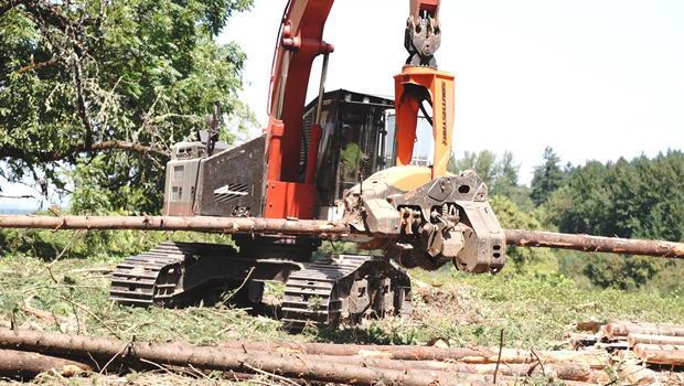 logging-620.jpg