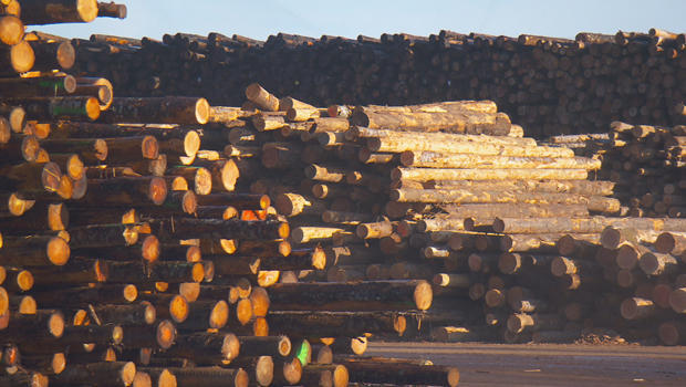 timber-oregon-620.jpg