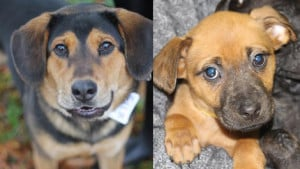 Pets-Available-For-Adoption-In-December--Cov
