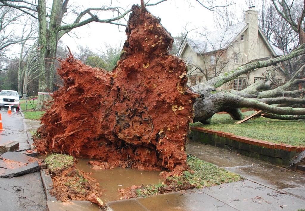 Fallin-Tree-on-Ardsley-7