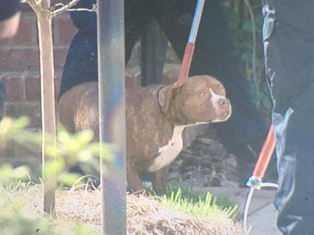 Two dogs were removed from the home following the attack