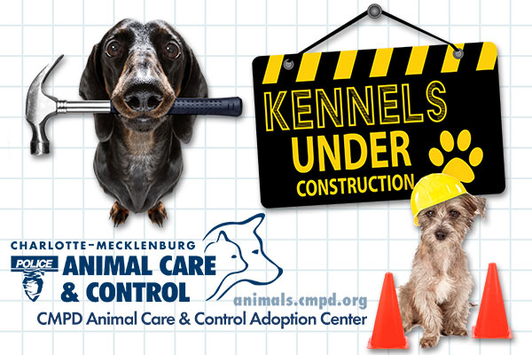 CMPD Animal Care & Control Waiving Adoption Fees For Adult Dogs