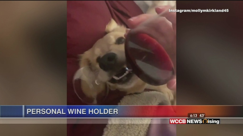 Viral Videos: Bus Driver Dances With Little Girl, Opera Singing Barista, Wine Holding Puppy