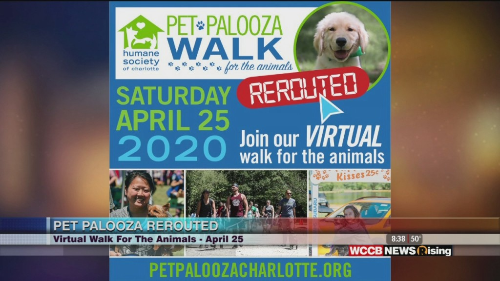 Humane Society Of Charlotte's Annual Pet Palooza Has Been Rerouted