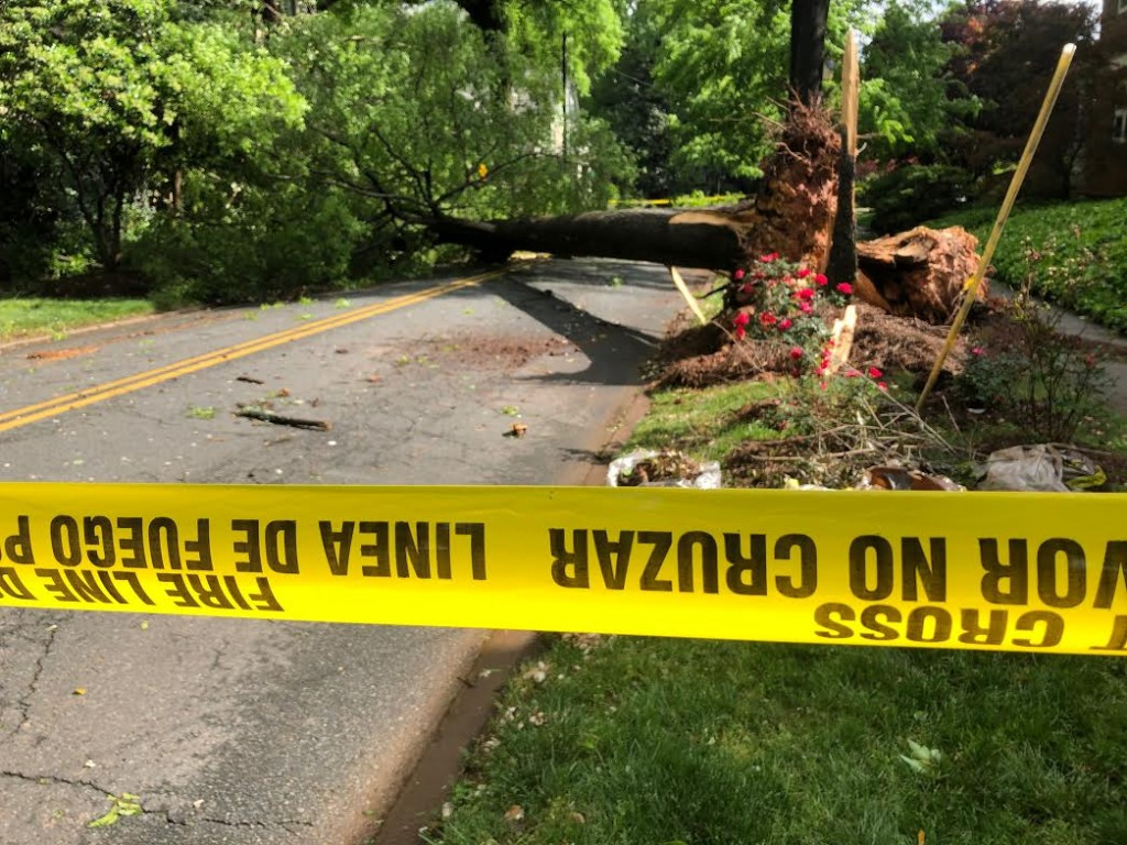 Euclid Avenue Tree Down In Charlotte