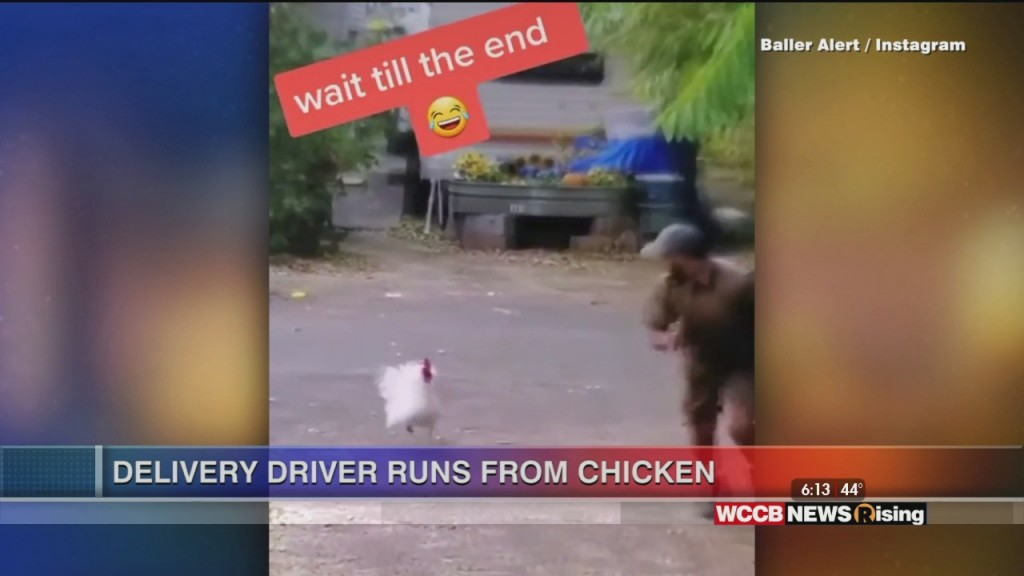 Viral Videos: Delivery Driver Runs From Chicken & Dad Celebrates Son's First Home Run