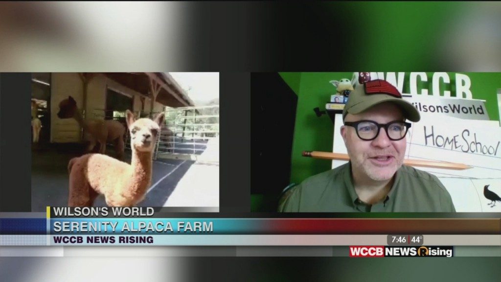 Wilson's World: Update With The Gantt Center And Learning About The Gentle Alpaca