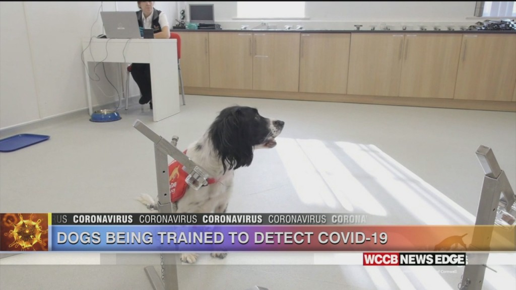 Dogs Could Soon Be Used To Sniff Out Covid 19